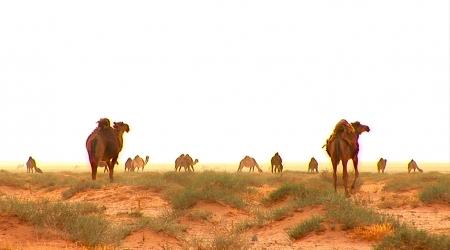 Месопотамия – следи в пясъка