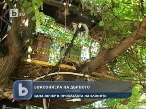 Боксониера, построена в короната на дърво