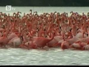Розово море от пера в Мексико